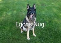 Egons Nugi