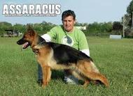 Tina of Assaracus