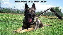 Haras Ja Na Ka