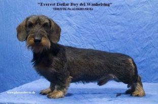 Everest Dollar Boy Del Wanhelsing
