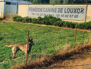 Lola du Domaine de Louxor