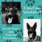 Z-Wurf vom Rabaukenhof V: Nox von Trogida, M: Vlicka vom Rabaukenhof