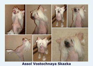 Assol Vostochnaya Skazka