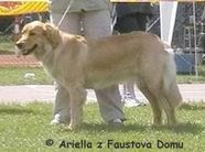 Ariella z Faustova domu