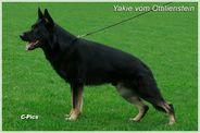Yakie vom Ottilienstein
