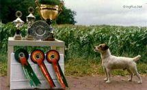 Foxwarren Digger of Rednock
