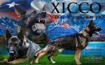 Xicco von Virginia