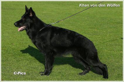 Khan von den Wölfen