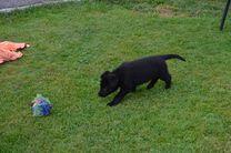 F-Wurf 6 Wochen alt