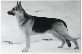 Gray (Romanov)