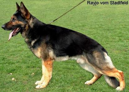 Rayjo vom Stadtfeld