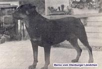 Berno vom Oldenburger Ländchen