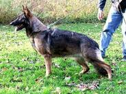 Alexia del Lupo Nero