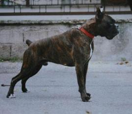 Rufus (LOI 98/81029)