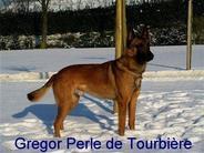 Gregor Perle de Tourbière