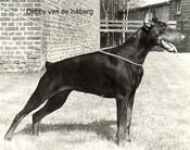 Debby van de Insberg