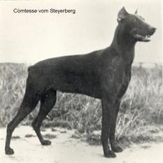Comtesse vom Steyerberg