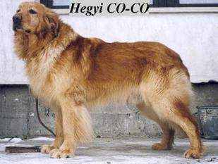 Hegyi Co-Co