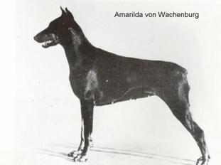 Amarilda von der Wachenburg