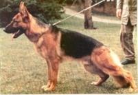 Yasso vom Fürstenberg