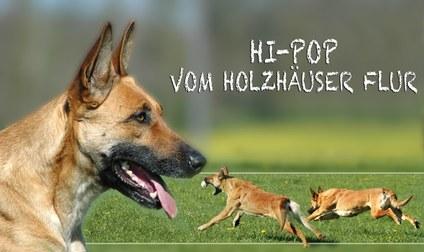 Hi-Pop vom Holzhäuser Flur