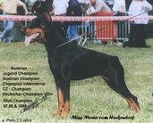 Miss Mona vom Heckendorf