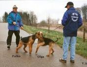 Falko vom Haßgau