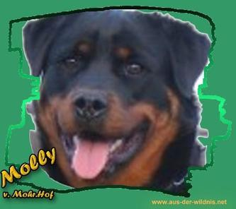 Molly vom Mohr-Hof