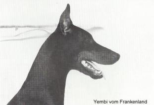 Yembi vom Frankenland
