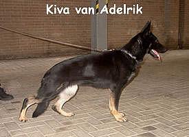 Kiva van Adelrik
