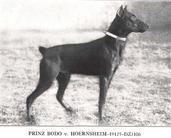Prinz Bodo von Hörnsheim
