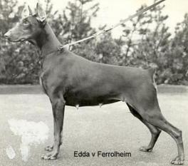 Edda van Ferrolheim