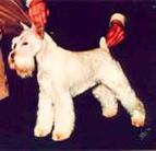 Mister King of Sant' Loui