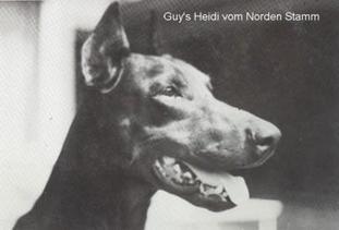 Guy´s Heidi vom Norden Stamm