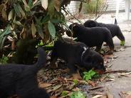 Puppies of : Desteny/Orlando