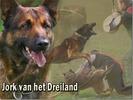 Jork van het Dreiland