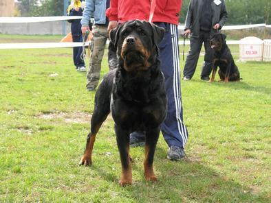 Athos Bodyguard Force