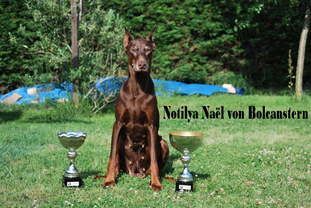 Notilya Nael von Bolcanstern