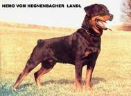 Nemo vom Hegnenbacher Landl