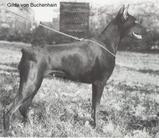 Gilda vom Buchenhain