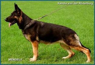 Kandie von der Röderburg
