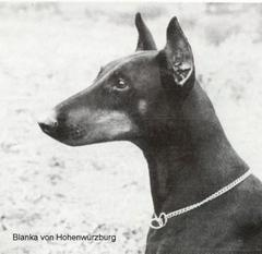 Blanka von Hohenwürzburg
