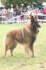 Saturne des Canis du Brabant