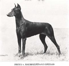 Freya vom Rauhfelsen