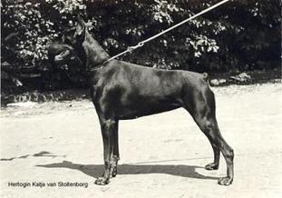 Hertogin Katja van Stoltenborg