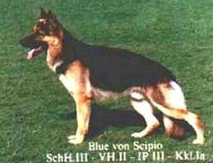 Blue von Scipio