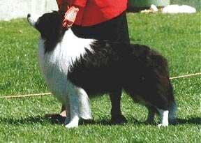 Lochinbrae of Clan-Abby
