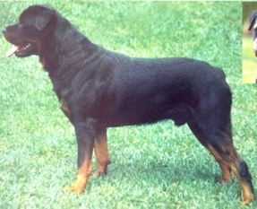 Chris vom Wolfseck
