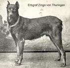 Erbgraf Zingo von Thüringen