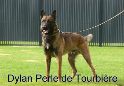 Dylan Perle de Tourbière